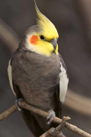 fugle til salg sjælland
